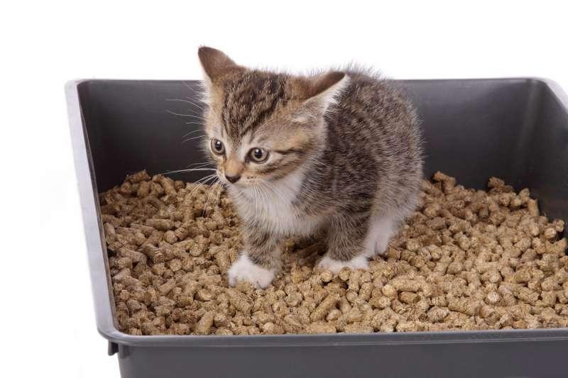 Litière pour chat